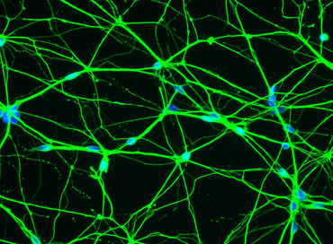 Mixed neurons